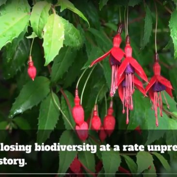 Biodiversity Funding Available