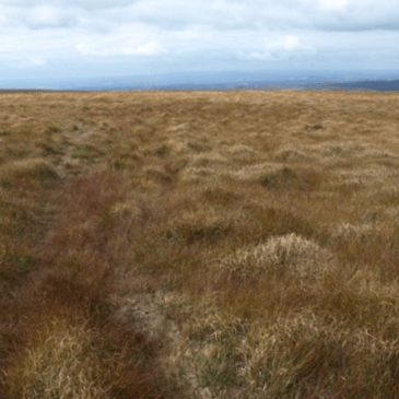 Peatlands Community Engagement Scheme 2019