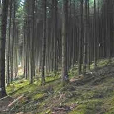 Leitrim PPN Forestry Policy Review – Update