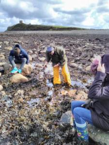 MSLETB Seaweed gathering